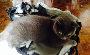 Fafner cat guards the magic Bikehelm