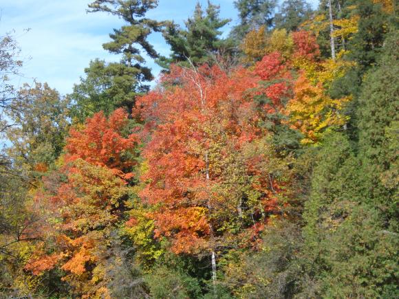 fall101308_6