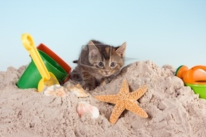 summer-kitten-cats-37226782-400-267